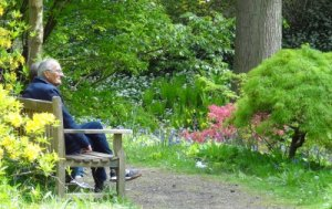 An elderly couple sitting on a bench in a woodland garden, admiring the azaleas and birdsong